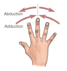 Adduction-abduction doigts